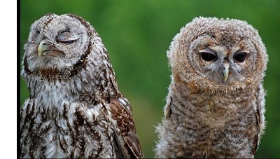 owl_ny