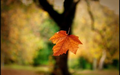 A leaf fell